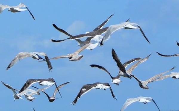 fotos oiseaux